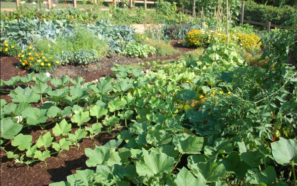 Kompostiranje za zdrav vrt