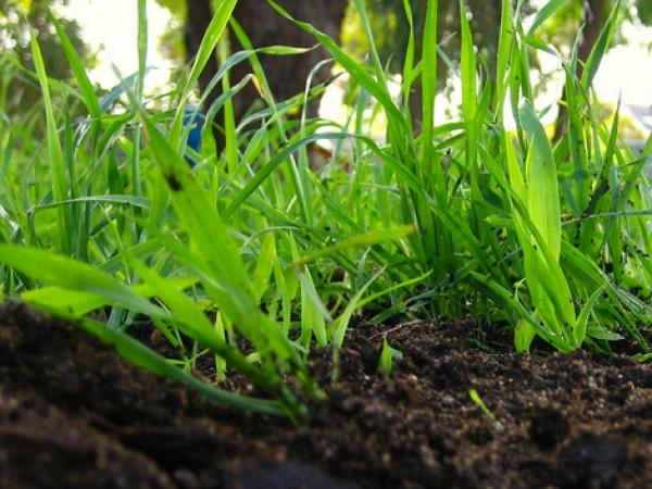 Kompostiranje za zdravo zemljo