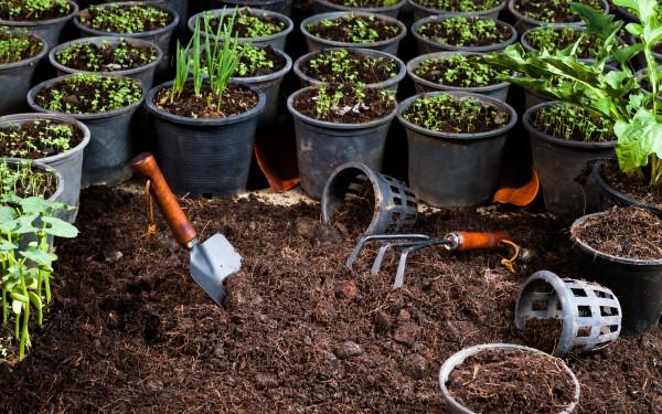 Naraven kompost za zelenjavo